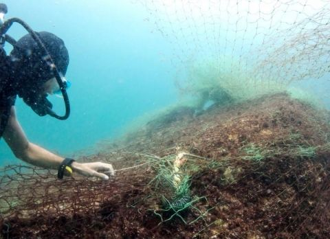 Experts say 70% of nation's coral reefs are damaged