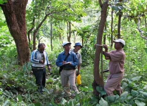 World Bank to provide aid in Myanmar forest restoration projects